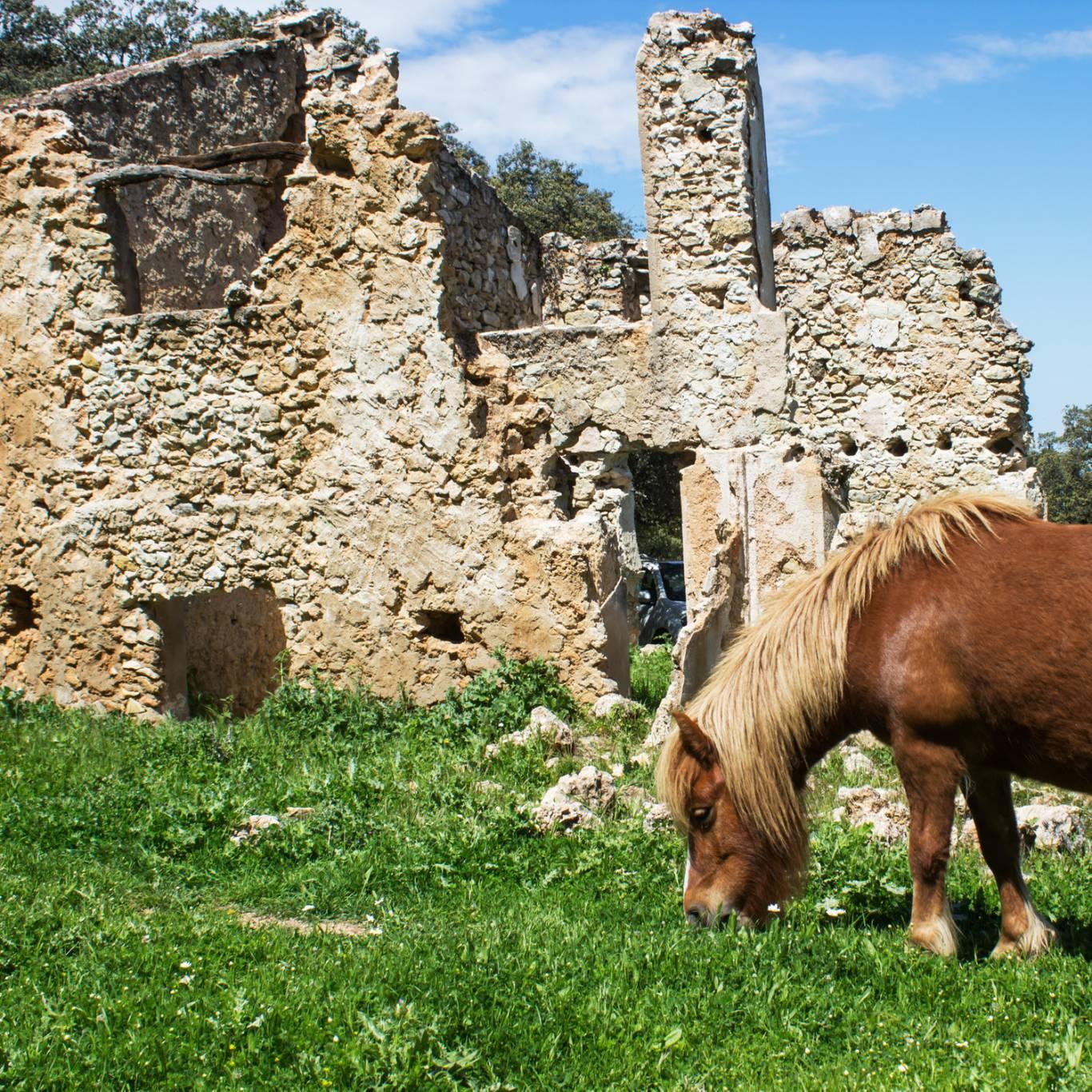 hotel-serena-rieti-horse